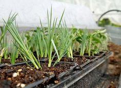 Comment bouturer simplement certaines plantes vivaces pour les multiplier à bon compte ? La réponse en image avec Hubert Fontaine.