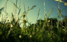 Grass HD Wallpapers Backgrounds Wallpaper