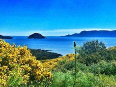 La bellezza sta negli occhi di chi guarda. Soprattutto se guardi la Sardegna fuori stagione.  #sardegna #gallura #today #march #amazing #nature #mediterranean #naturelovers #golfoaranci #sardinia #offseason #ginestra #seaview #tavolara #figarolo #island #lovelyday #aplacetoremember #italy #sardinien #march #broom #landscape #whataview
