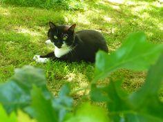 Shizume #cat #garden #nice