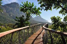 Good news: The Kirstenbosch Botanical Gardens in Cape Town are set to open their new aerial walkway in Mid April! Romantic Destinations, Romantic Getaways, Vacation Destinations, April Vacation, Anniversary Getaways, National Botanical Gardens, Top Pic, Outdoor Fun, Walkway