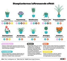 Grafik: Opgrader din sundhed med de rette stueplanter | Viden | DR
