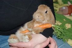 """I love my carrot."""