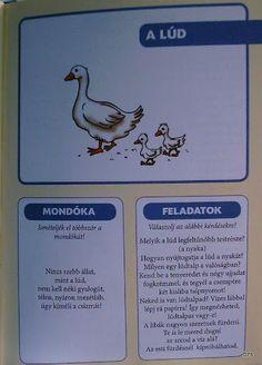 Deákné B. Album, Reading, School, Animals, Picasa, Animales, Animaux, Word Reading, Reading Books