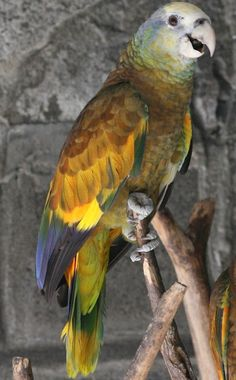 Essay my pet bird parrot