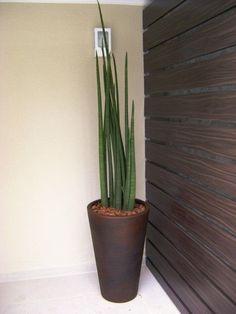 Resultado de imagem para Lança vaso planta