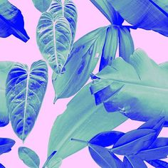 rhiannaellingtondesigns: New leaf print in pink and electric blue