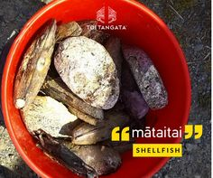 """What's going on your Christmas table?"""" Gather the shellfish so that our bucket is full to the brim. Now we have enough for a feed. Kupu o te wiki: mātaitai. Sweet Potato, Christmas Time, Seafood, Bucket, Vegetables, Maori, Sea Food, Vegetable Recipes, Buckets"""