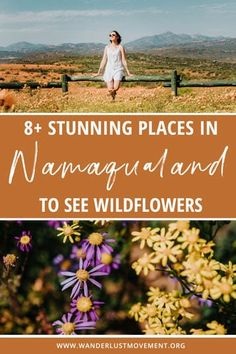 Namaqualand in South Africa is the greatest wildflower show on Earth! Each year, the arid desert region transforms into a see of rainbow-hued daisies for as far as the eye can see. Here are some of the best places in Namaqualand to see the wildflowers and cover yourself in daisies! South Africa bucket list | Things to do in South Africa | #southafrica #namaqualand #wildflowers #travel