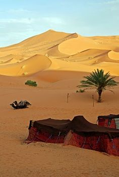 Moroccan Sahara [photo by Craig MacPherson, Canada]. The travelling people of the deserts Desert Oasis, Desert Life, Desert Dunes, Desert Places, Deserts Of The World, Photo Images, North Africa, Beautiful Landscapes, Wonders Of The World