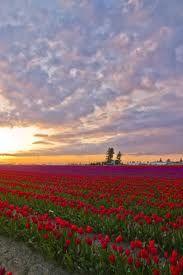 La Conner Washington ... Tulip Festival