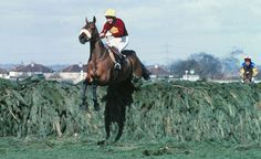 Red Rum winning the 1977 Grand National. Thrice winner of the Grand National. All The Pretty Horses, Beautiful Horses, Grand National Horses, Derby Horse, Horse Facts, Types Of Horses, Sport Of Kings, Photo D Art, Thoroughbred Horse