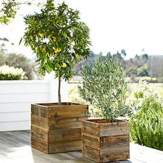 I have neither a lemon or olive tree and I'd like a few each of both.  Love the timber pot plants on the deck..... gorgeous!