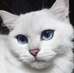 "Coby The Cat has given new meaning to the phrase ""cat-eye."" With his gorgeous baby blues, the British shorthair manages to entrance his many (274K!) Instagram followers with each and every snapshot. Aside from the oceanic color of his iris, Coby's eyes have a thick, black line around them with a slight flick at the outer corners—making it look as though the cat's an eyeliner expert! The naturally beautiful feline also has, according to his Facebook bio, ""big blue eyes & an even bigger…"