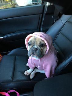 I love wearing my hoodie on chilly mornings. It keeps my ears soooo warm. http://ift.tt/2eVt8Et
