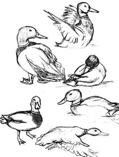 realistic line drawings of water fountains - - Yahoo Image Search Results Bird Drawings, Pencil Art Drawings, Art Drawings Sketches, Animal Drawings, Cool Drawings, Drawing Animals, Horse Drawings, Sketch Drawing, Drawing Ideas