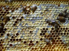 Backyard beekeeping. See more at: fmicrofarm.com