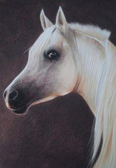 Horse White Arabian Portrait Pastel 2 by PASTELIZATOR.deviantart.com on @deviantART