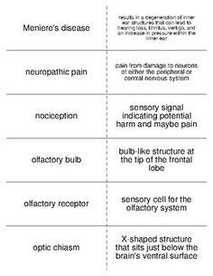 Sensation and Perception Part I Vocabulary Crossword For ...