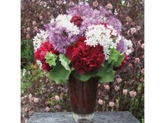 Allium & Peonies, with a petticoat of lady's mantle foliage! prinzing-slow-debra-flora