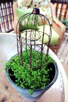 Table top garden idea from the inspired home