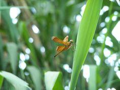 TMII Taman Serangga dekat museum air tawar 8 Des 2007