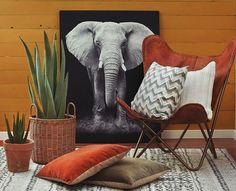 Butterfly Chair, Safari, House Design, Interior, Inspiration, Furniture, Ethnic, Homes, Home Decor