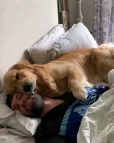 Viens sur Hooman Lève-toi et nourris-moi - Hunde - # # Cute Funny Animals, Cute Baby Animals, Animals And Pets, Cute Animal Videos, Funny Animal Pictures, Cute Dogs And Puppies, I Love Dogs, Doggies, Funny Dog Videos