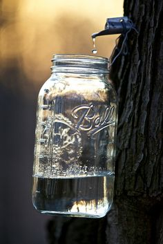 MAPLE SYRUP: Comes from the sap of sugar maple trees. The sap is boiled to evaporate the water, leaving a thick syrup. Two teaspoons contains 22 percent of your daily magnesium. Pot Mason, Mason Jar Lamp, Maple Syrup Taps, Pots, Sugaring, Maple Tree, Canning Jars, Kraut, Farm Life