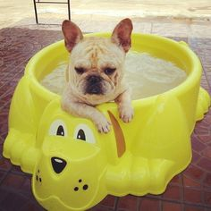 Hot Tubbin - Frenchie style Limited Edition French Bulldog Tee http://teespring.com/lovefrenchbulldogs