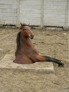 This horse who was only exploring: | 28 Animals Who Have Made A Huge Mistake