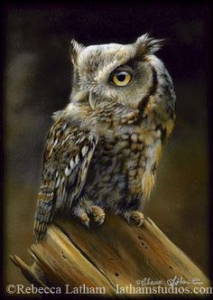 The Latham family of wildlife artists. Realistic miniature painting in today's modern art market of galleries & exhibitions. Classic & detailed wildlife painted 'in miniature' - exhibited & collected world wide. Wildlife Paintings, Wildlife Art, Animal Paintings, Owl Bird, Bird Art, Pet Birds, Owl Photos, Owl Pictures, Watercolor Bird