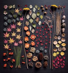 p The photography of Ja Soon Kim is beautifully arranged and structured Focusing on wild flora and fruit the artist gathers dried leaves and flowers on one surface to capture the composition from a # Art Floral, Deco Floral, Land Art, Art Et Nature, Collections Photography, Nature Collection, Cloudy Day, Flower Art, Art Flowers