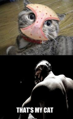 Banes Cat - www.funny-pictures-blog.com