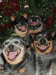 ~•♡• Four Smiling Faces •♡•~