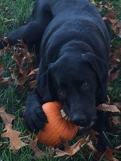 She finally got a pumpkin!