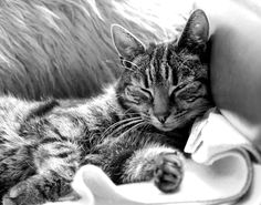 We love black and white photos of pets, so we've pinned a few of our favourites! #Pets