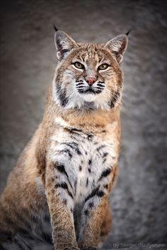 Love this Animal