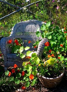 Really fantastic article with tons of links about potagers, companion gardening, etc., etc., etc.