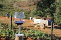 The 5 Secrets to Growing Perfect Pinot Noir
