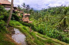 #Bali Rice Field // #Indonesia // #Travel