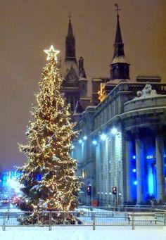 Christmas tree in Aberdeen ~ Scotland