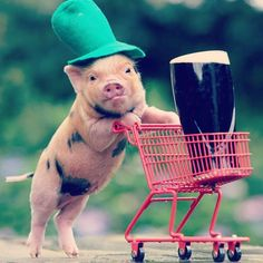 Happy St. Patrick's day!!! Oink-oink! #luckypig #luckypigdesign #oinkoink #patricksday #dublin www.luckypig.ie Website Design Dublin Graphic Design Ireland Branding Social Media Logo Design Brochure Design Dun Laoghaire Blackrock Monkstown Dalkey Lucky Pig