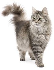 VETiONX® Derma-IonX™ for Cats - Relief for Red, Itchy Skin & Inflammation