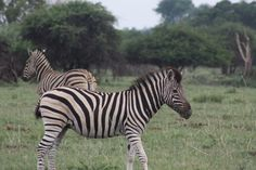 The Dinokeng Game Reserve is Gauteng's only Big Five game reserve.