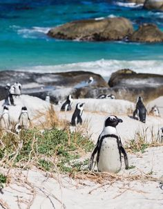Boulders Beach - The Best Beaches in Cape Town, South Africa - Condé Nast Traveler South African Holidays, Places To Travel, Places To Visit, African Penguin, Boulder Beach, Holidays Around The World, Cape Town South Africa, Picture Postcards, Africa Travel