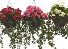 Handmade artificial geranium and ivy hanging basket available in various colors and sizes. This hanging basket is handmade and therefore can be customized to your taste