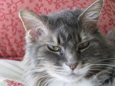 Raja... she was the sweetest kitty.