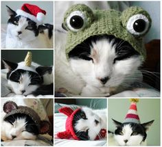 Crochet Cat Hat Patterns - These are kind of awesome, and if I could knit or crochet I'd make them!