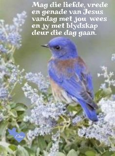 Goeie More, Good Morning Wishes, Messages, Animals, Decor, Decoration, Decorating, Animaux, Animales